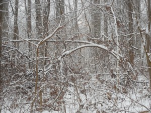 More Snow In The Woods