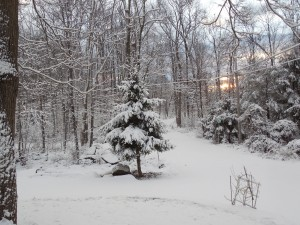 Morning after a new snowfall