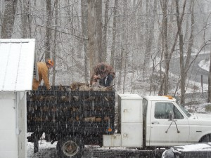 Unloading fire wood in the snow