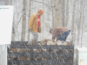 Unloading firewood in the snow