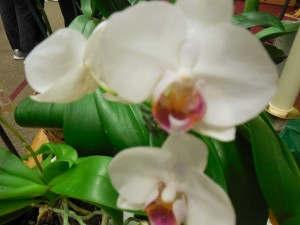 White orchid up close