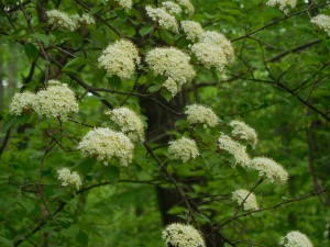 Close up of tree with white flowers