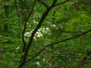 White flowers among the greenery
