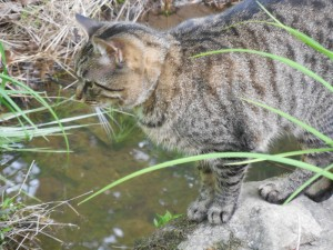 Magrat hunting frogs